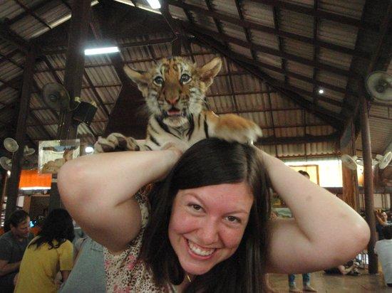 Tiger Temple ( Wat Pa luang Ta Bua) : lol tiger cub on my head
