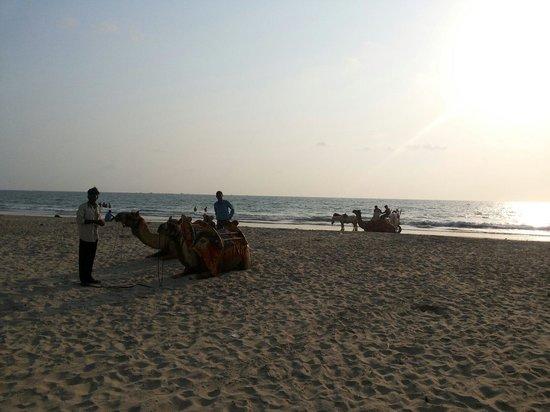 Tarkarli Beach: Tarkarli