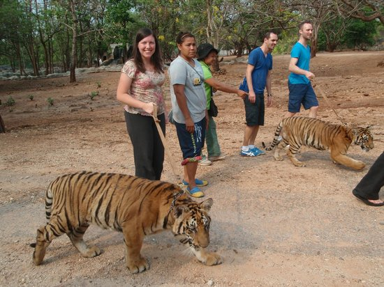Tiger Temple Thailand Tour : more walking