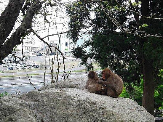 園内のお猿さん - Picture of Takasakiyama Natural Zoo, Oita - TripAdvisor