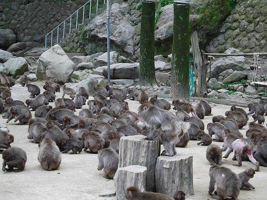 Takasakiyama Natural Zoo : 園内のお猿さん