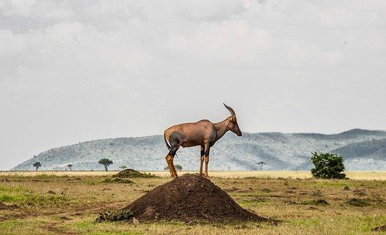 Losokwan Camp Maasai Mara: Losokwan Safari Camp