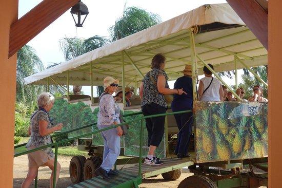 Finca Corsicana Pineapple Farm: All aboard!!