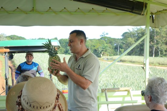 Finca Corsicana Pineapple Farm: This is a pineapple