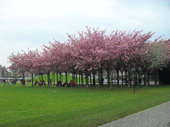 Musée van Gogh : Сливовый сад у музея