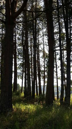 Stanford Lake Lodge: Trees up in the forest