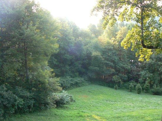 Royal Oaks Cabins: vu du chalet
