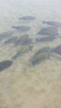 Domina Coral Bay Prestige Hotel: fish that you can sea in the salt lake!