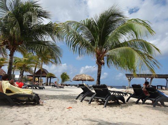 Lions Dive & Beach Resort Curacao : beach area