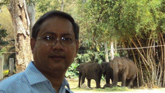 Bannerghatta National Park : Me & the elephants