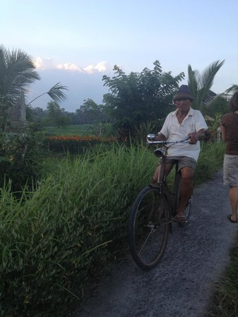 Mulawarman Ubud Bali: rice paddies