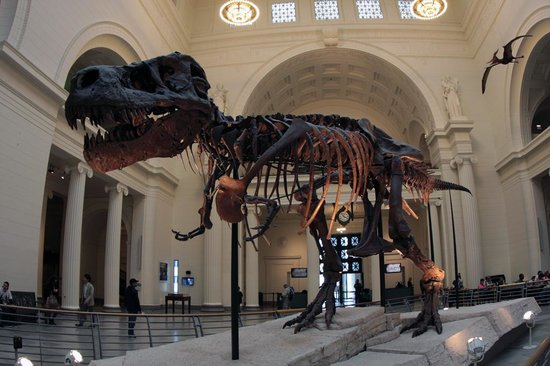 The Field Museum : フィールド博物館スー