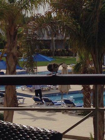 Jaz Little Venice Golf Resort: Breakfast