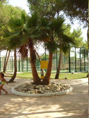Iberostar Club Cala Barca: Zona recreativa