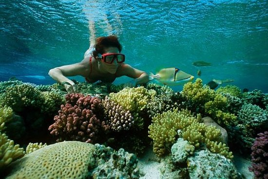 Îles Giftoun : Snorkelling 2