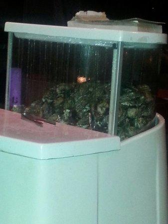 IL Gusto Ristorante : Live Oysters