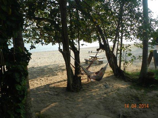 Morning Star Resort : hammocks