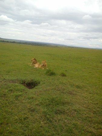 Wajee Mara Camp: King of the jungle
