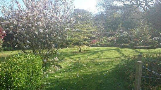 Ivy Cottage B & B: Back Garden