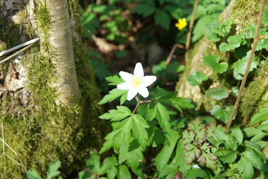 Boarstall Duck Decoy: Enjoy the spring flowers