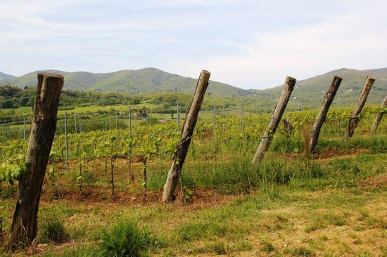 Borgo di Casagrande: Vista lateral desde los viñedos