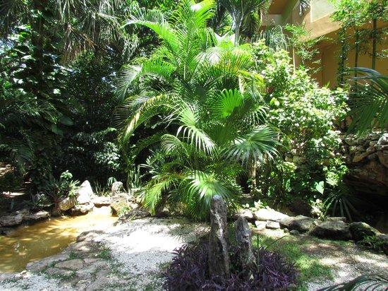Viva Wyndham Azteca : Végétation
