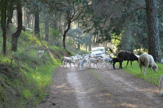 La Caracola Hotel Rural: pastoreando