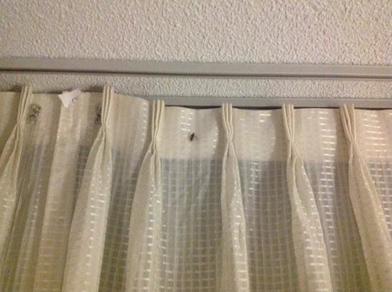 Millennium Maxwell House Nashville: bug in curtains