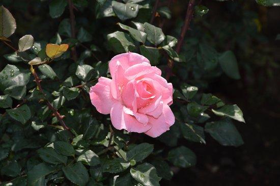 JC Residency: Flora