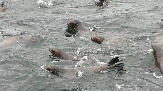 Seas The Day B&B: Thousands of seals by boat trip, excellent recommendation by Bill