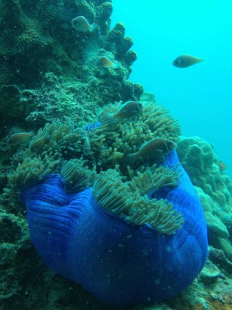 Discovery Dive Centre: Koh Tao