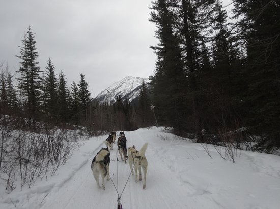 Snowy Owl Sled Dog Tours: On the trail
