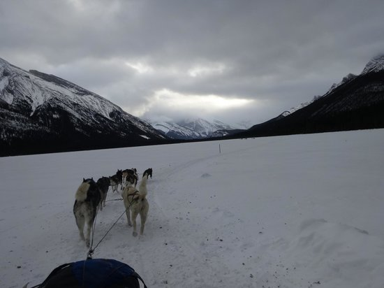 Snowy Owl Sled Dog Tours: across the lake