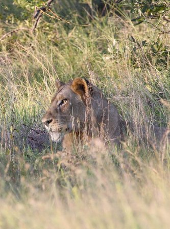 Africa Spear Kruger Park Safaris - Day Tours