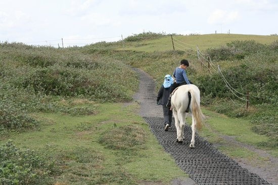 Seopjikoji: Horse Riding