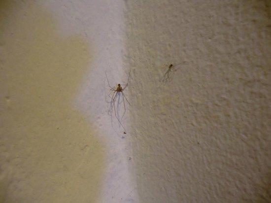 Grand Sirenis Riviera Maya Resort & Spa: Visitantes inesperados en la habitación (no tengo fotos de la cucaracha)