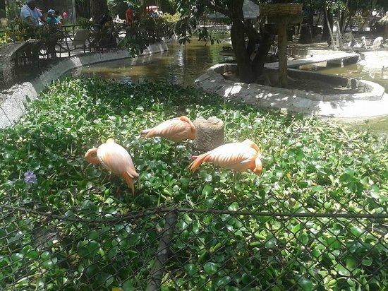 La Aurora Zoo : flamingos