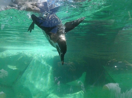 La Aurora Zoo : pinguinos