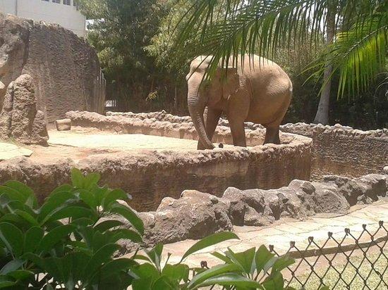 La Aurora Zoo : elefante