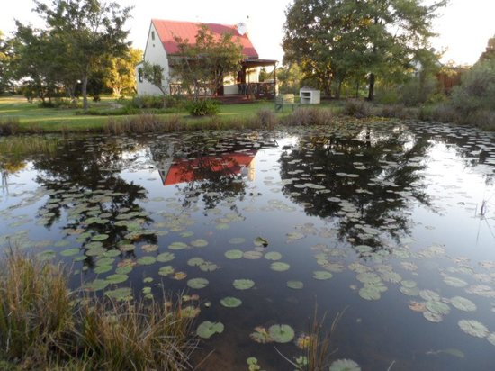 Forest Edge Nature-lovers' Retreat : Cottage and pond