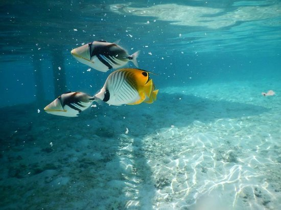 Cinnamon Dhonveli Maldives : Fish