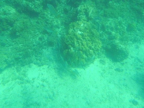 Undersea Explorer : coral