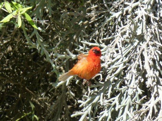 Le Paradisier: Petit oiseau