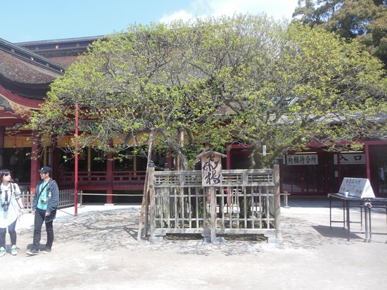 Dazaifu Temmangu Shrine: お久しぶりです。