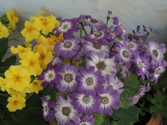 Khazanchand Mansion: Flowers .