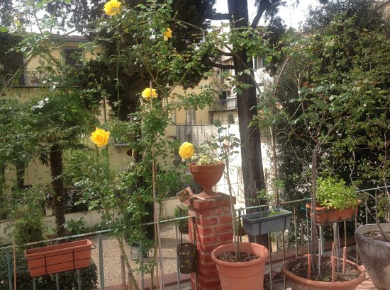 Hotel Il Bargellino: More Gorgeous Roses