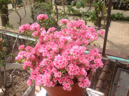 Hotel Il Bargellino: Lovely blossoms
