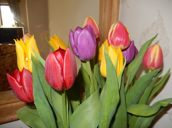 Moor View Bed and Breakfast: Easter tulips