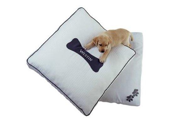 The Westin Georgetown, Washington D.C.: Heavenly Dog Bed