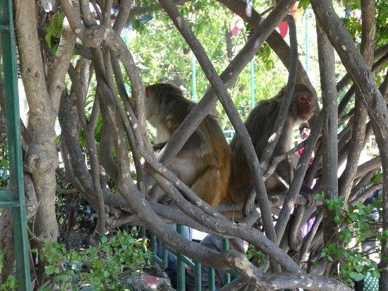 Swayambhunath Temple: Monkeys all around